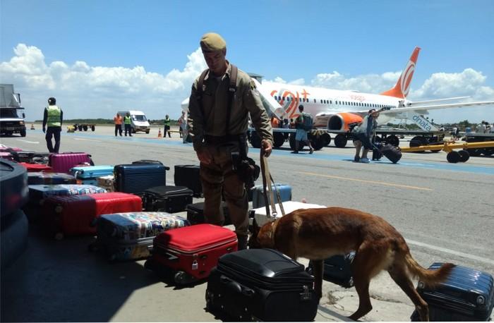 Forças de segurança intensificam operações e usam cães farejadores  no Aeroporto de Porto Seguro.