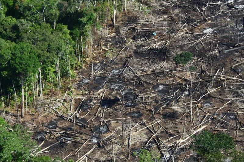 Força-tarefa inicia ações de fiscalização ao desmatamento no Extremo Sul do estado