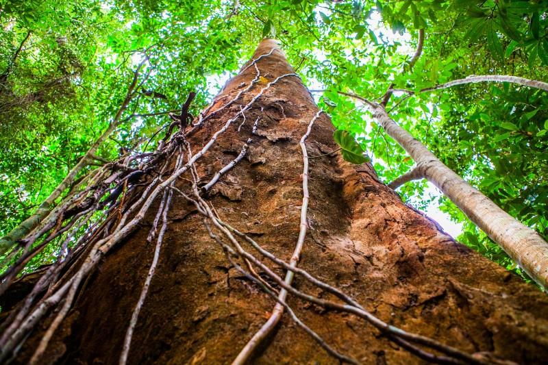 Sul da Bahia é destaque em preservação ambiental