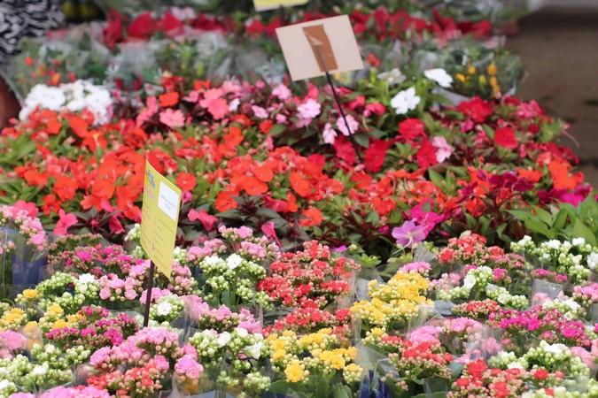 Porto Seguro e Flores de Holambra reafirmam parceria social