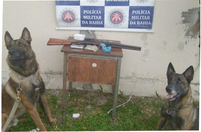 Cães farejadores do 8°BPM auxiliam na prisão de traficantes em Cabrália