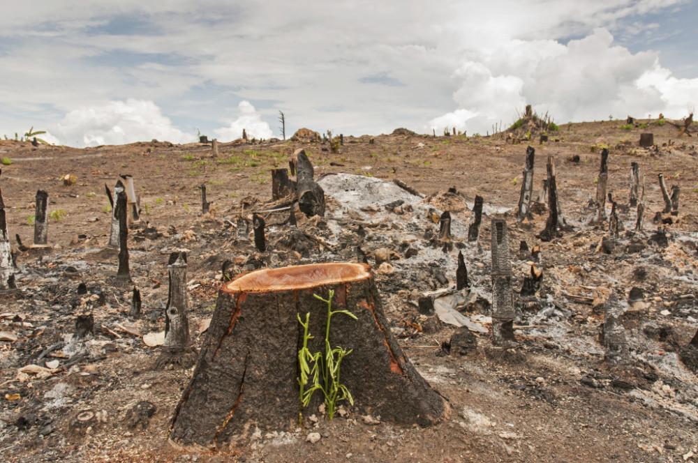 Cabrália e Belmonte lideram ranking de desmatamento nacional.